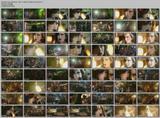 Amy Winehouse - x17 Performances Videos + 172 Caps